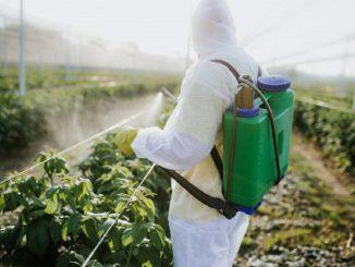 42% de frutas y verduras que consumimos poseen residuos de plaguicidas