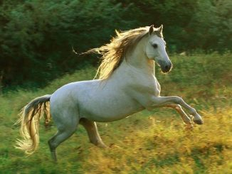 La fiebre del Nilo llega a Extremadura: dos caballos infectados