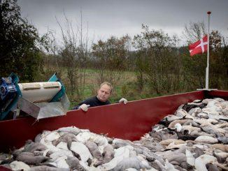 Renuncia el ministro que aprobó el sacrificio de visones en Dinamarca