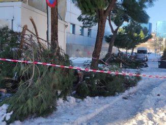 El Gobierno declara zona catastrófica las zonas afectadas por Filomena