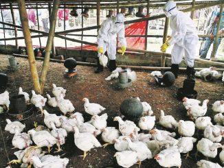 Rusia detecta primer caso de gripe aviar H5N8 en humanos
