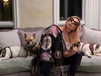 Koji y Gustav: los dos perros robados de Lady Gaga