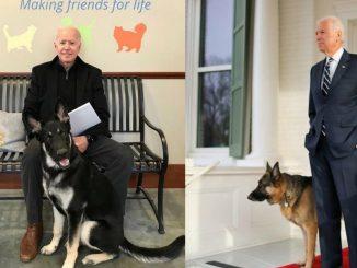 Perros de Joe Biden expulsados de la Casa Blanca