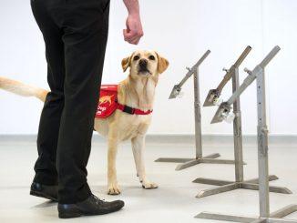 perros-detección-covid