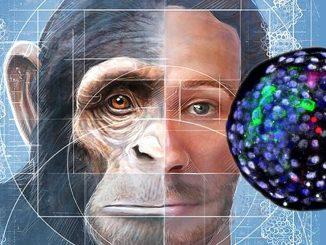 Crean embriones híbridos de humano y mono