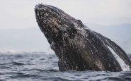 Un buzo sobrevivió tras ser tragado por una ballena por unos segundos