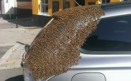 abeja reina nido