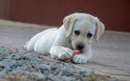 ¿Qué debe y no debe comer un perro?