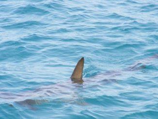 Brasil, un hombre sufre un ataque de un tiburón tras ir a orinar a la playa