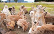 isla de los conejos