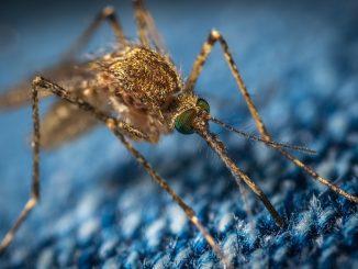 remedios mosquitos