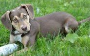 Gracias a su olfato una perrita salva la vida de una niña abandonada