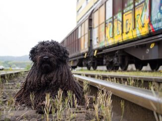 Un perro es rescatado en la vía en el último segundo