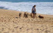 Conoce las playas para perros en España para ir este verano