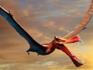 australia dinosaurio volador
