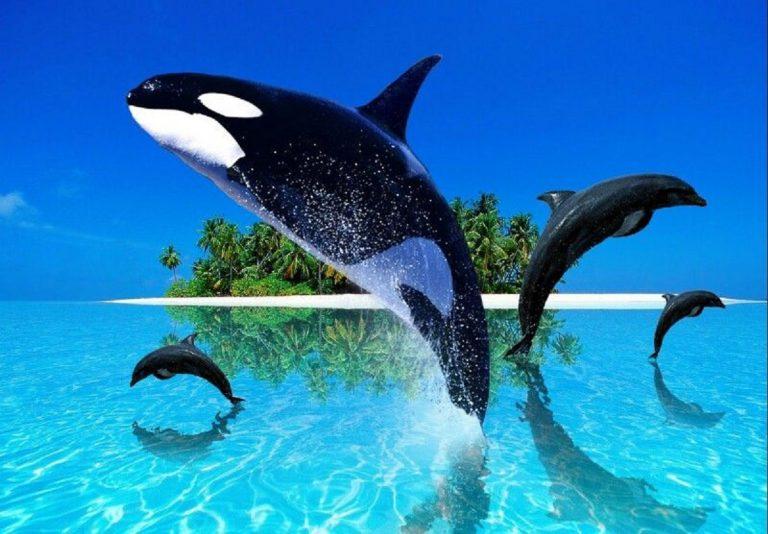 ¿Dónde ver delfines y orcas en España?