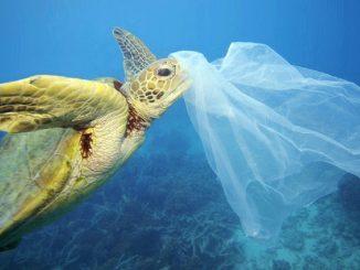 plastico oceanos