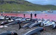islas feroe delfines