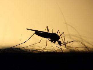 mosquitos castellon