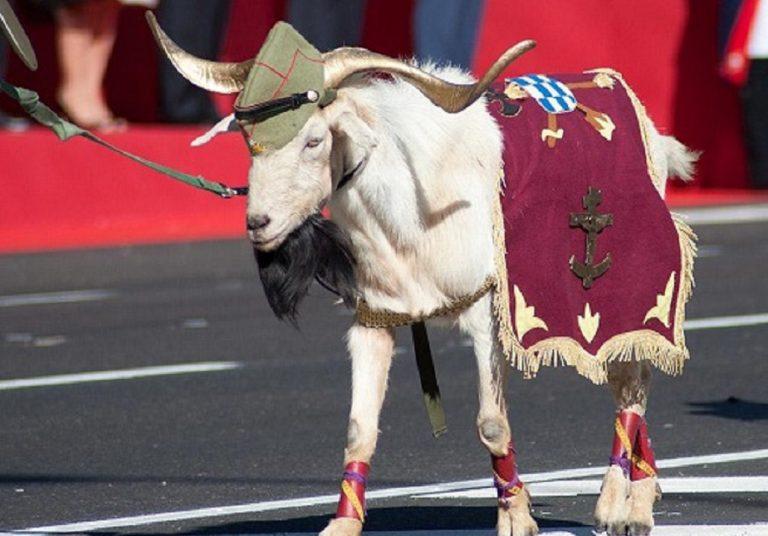 Legión, cabra