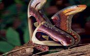 mariposa o serpiente