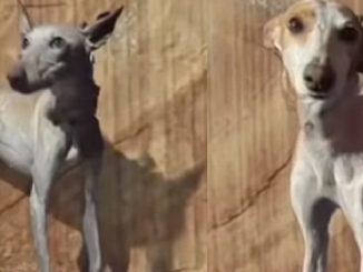 perros-rescatados-la-palma-protectora