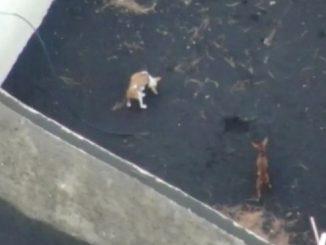 perros-rescate-la-palma